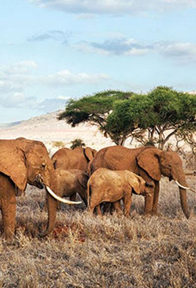 ALTRUISTIC---Africa-Eco-Safaris--Zimbabwe,-Botswana,-Kenya-&-Beyond